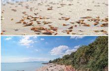 江门台山一个新开发有贝壳捡的免费海滩