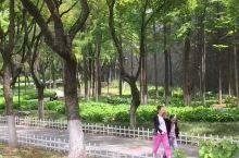 绣球公园踏青