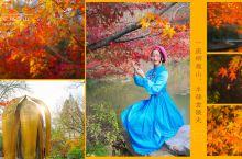 南京栖霞山,枫叶红于二月花