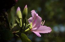 花辞树,以叶为美。 叶落尽,以枝为姿。 枝若朽,以根为雕。 人生如四季,我亦如良木。#春分# 鹭潮鼓