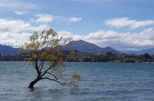 新西兰南岛,在湖中孤独的网红树