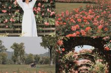 朋友以为我去了南法庄园杭州蔷薇花墙美
