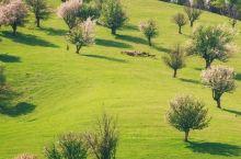 那拉提草原杏花|新疆春季杏花赏花摄影攻略