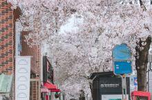 |||韩国首尔赏樱花