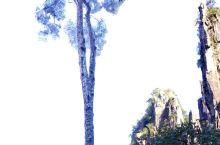 湖南莽山五指峰