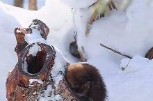 雪中的小精灵,治愈一切不可爱