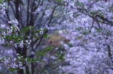 童话中的樱花山林