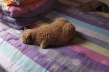 这么萌的猫你们有吗