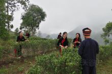 在龙州八角乡后山茶园拍摄的音乐电影MV《龙州媚》,采用电影设备进行拍摄,北京京驰文旅的莫京豪导演和摄