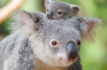 #奇趣昆士兰# 口罩挡住了人们的笑容,却无法隔绝真诚与友爱。分享一些昆士兰朋友们灿烂的笑容给大家吧~