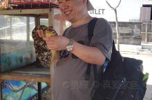 海龟岛上平生第一次与蟒蛇拍照留念!