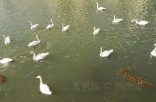 鹅要过河,河要渡鹅