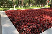 红花绿草~~~