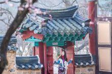 韩国旅行 首尔的樱花
