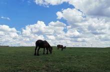草原很漂亮