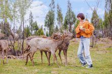 郑州周边游 | 小奈良喂鹿+网红打卡地