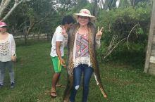 翻老照片发现也是曾经在亚马逊抱大蛇的少女