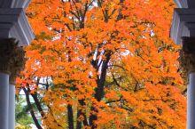 彼得堡的秋!!!