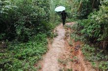 因为下着雨,龙州八角乡菊功屯的山路非常烂,我们撑着伞慢慢的走,脚下很滑。 20分钟后,终于看到山路上