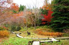 六甲山植物公园的秋景!
