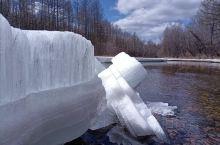 中国最冷小镇黑龙江省大兴安岭地区呼中,在五月灿烂的阳光和春风里,冰河已经开始融化,巨大的冰排渐渐的消