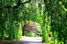 绿色|可呼吸、养眼的景