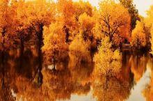 秋天的最后一抹景   额济纳旗九天八晚