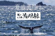 在夏威夷Maui岛的一大惊喜出海看鲸鱼  最近去拥抱海洋了吗?在夏威夷Maui岛的一大惊喜,坐船出海