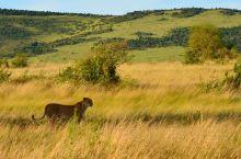 世界上最好的野生动物保护区之一