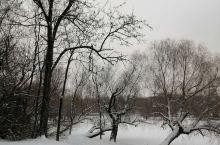 雪      景