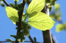 【山人云游记】开州春天的叶子