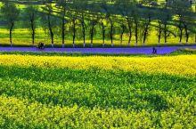 春游去罗平,置身于花海!
