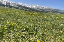 那拉提:草原献给雪山的鲜花