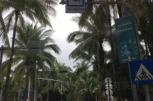椰子树不一定长在海边