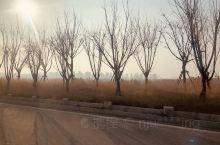 暖阳下,路边的风景格外美!