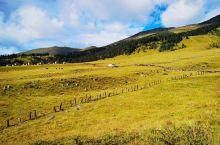 """玉科草原位于四川甘孜州道孚县玉科镇境内,面积大而平坦,间以森林,十分迷人,是极为罕见的天然画卷。""""玉"""