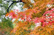 深秋的庭院是红色的