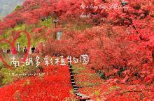 """""""枫""""情万种———南湖多彩植物园"""
