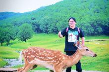 遇见伊春,一鹿有你|胜过奈良的赏鹿圣地