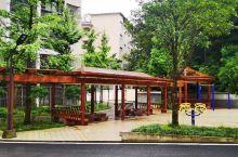 雨雾里谋道场 中国水杉植物园