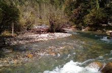 红石阵位于四姑娘山景区长坪沟内,这里群山环抱,植被丰茂,自然风光优美,河滩上有很多敷着红色真菌的石块