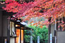京都红叶季之岚山厌离庵、宝筐院、宝嚴院