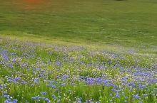 暑期草原行,必须去呼伦贝尔