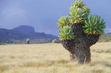 生长在地球上的外星植物|童话世界的巨树