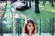 杨州旅游 超适合拍照的水上森林