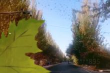 我的秋天之旅