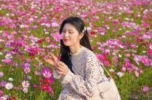 春天赏花踏青胜地