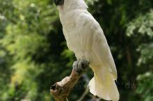 安佐公园内的动物园,蚊子超级多啊!这里的鹦鹉会用印尼语说你好!有意思!