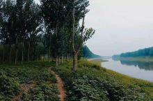 香河城郊树林