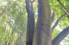 贵州省安顺市黄果树瀑布景区